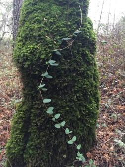 Daisy chain. Credit: Miranda Leitsinger